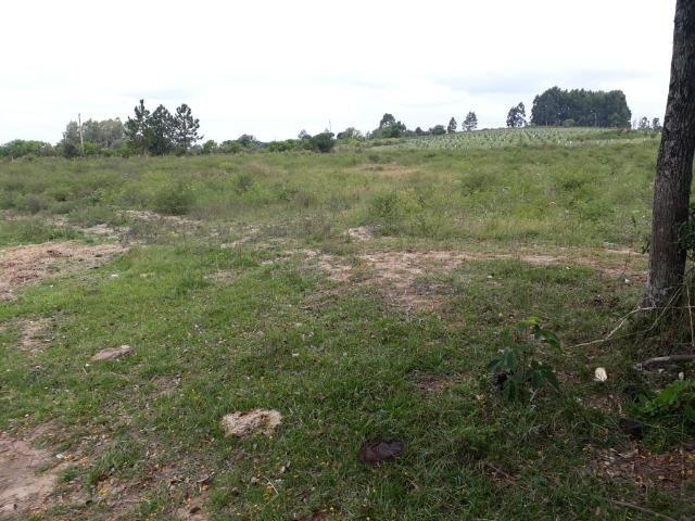 Área 25.5 hectares - Foto 2