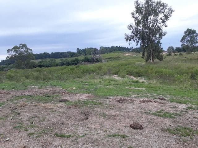 Área 25.5 hectares - Foto 3