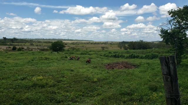 Fazenda, soja e pecuária
