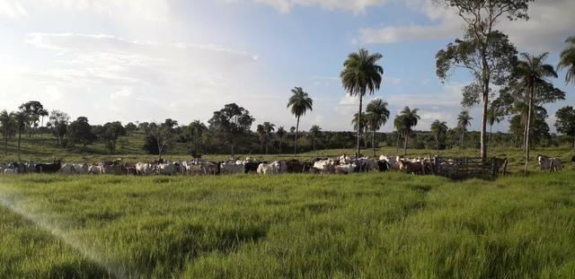 Fazenda - Foto 12