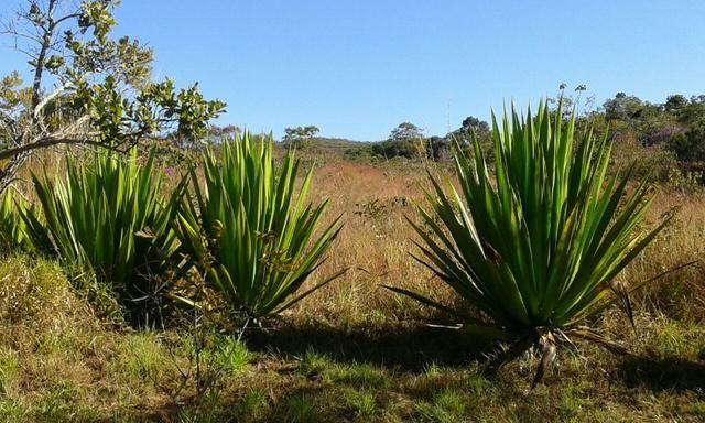 Chácara com área de 4000m², 14 km de Alto Paraíso de Goiás - Foto 8
