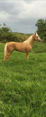 Cavalo MM  - Foto 2