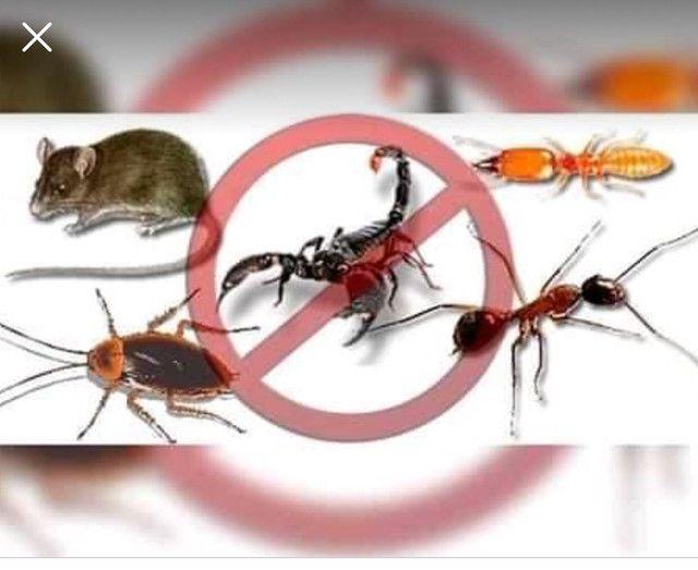 Dedetização sanitização contra Corona vírus  - Foto 3