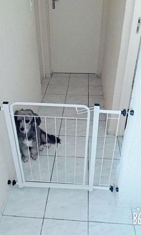 grade de Segurança para animais de estimação