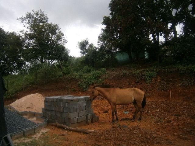 Cavalo arriado com charrete - Foto 6