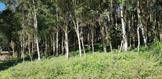 Vendo área para formar chácara em Mandirituba localidade Guapiara 12.000 metros. - Foto 4