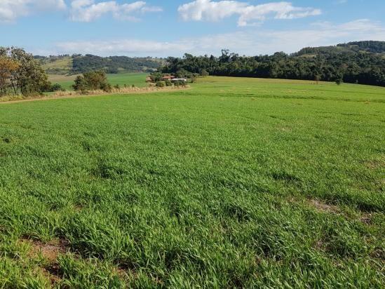 8345 | Sítio à venda em Rural, Santa Maria - Foto 2