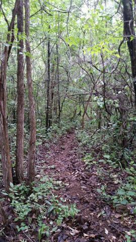 Chácara com área de 4000m², 14 km de Alto Paraíso de Goiás - Foto 13