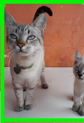 Gato macho - Foto 4