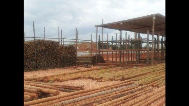 madeira de eucalipto para telhado e galpão! - Foto 3