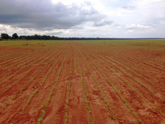 Fazenda 873 ha S.J. Rio Claro MT - Foto 4