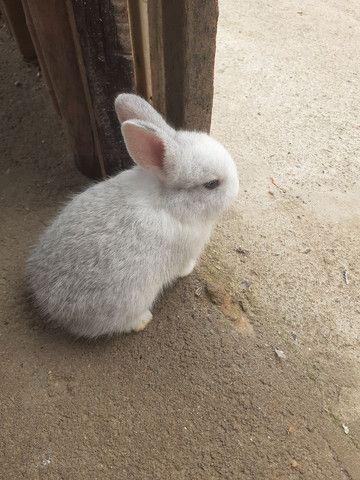 Vende-se filhotes de coelho  - Foto 2