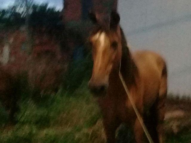 vendo ese cavalo 1700  - Foto 3