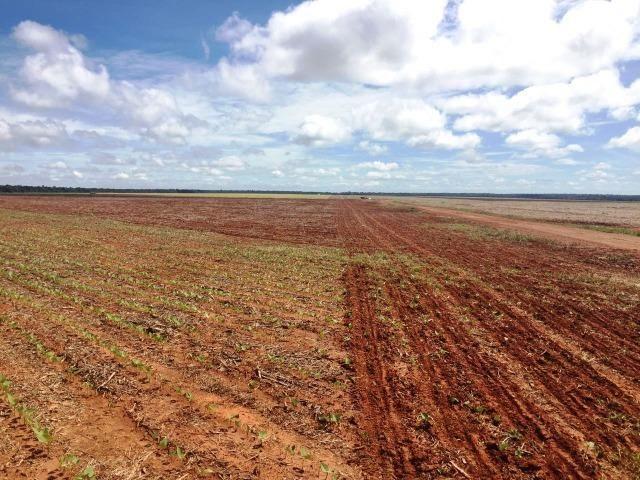 Fazenda 873 ha S.J. Rio Claro MT - Foto 11