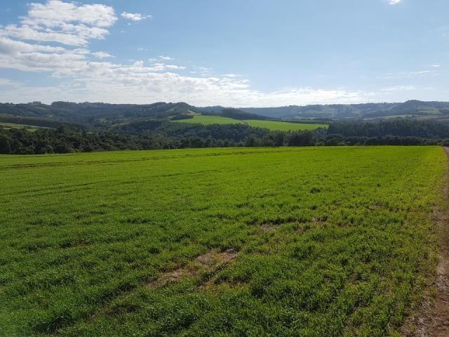 8345 | Sítio à venda em Rural, Santa Maria