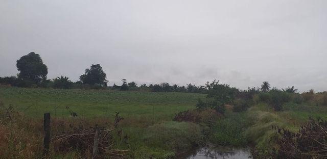 Cachoeiras de Macacu terra excelente para produção - Foto 3