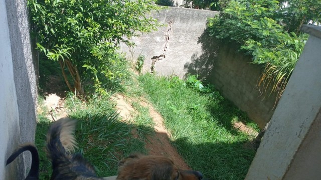 Edinaldo Santos - Bairro Amazônia, casa duplex de 2 quartos e quintal ref. 962 - Foto 12