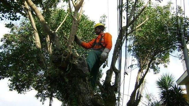 Alisson poda de árvores corte e remoção em até 12x nós cartões