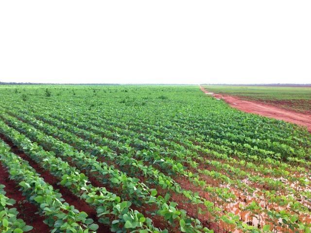 Fazenda 873 ha S.J. Rio Claro MT - Foto 9