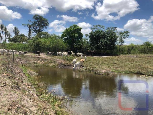 Fazenda com 3 dormitórios à venda, 530000 m² por R$ 1.400.000 - Centro - Curral de Cima/PB