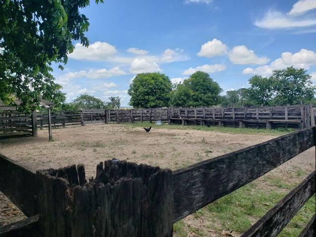 Fazenda, soja e pecuária - Foto 7
