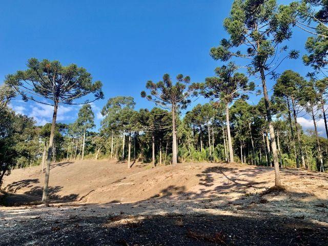 Chácara em Urubici/ terreno em Urubici/ Urubici - Foto 7