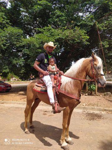Cavalo MM  - Foto 3