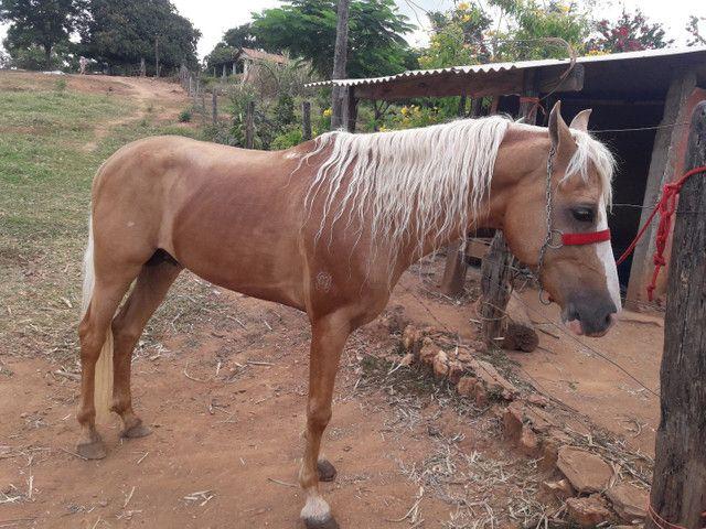 Cavalo MM  - Foto 4