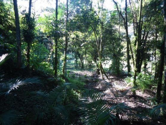 Chácara à venda em Pirabeiraba, Joinville cod:18298N - Foto 20