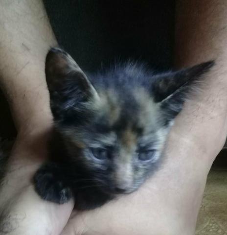Doação De Filhotes De Gato - Foto 3