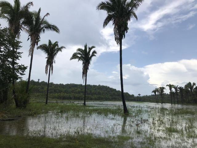 Vendo terreno 126 ha, Zona Rural de Miguel Alves
