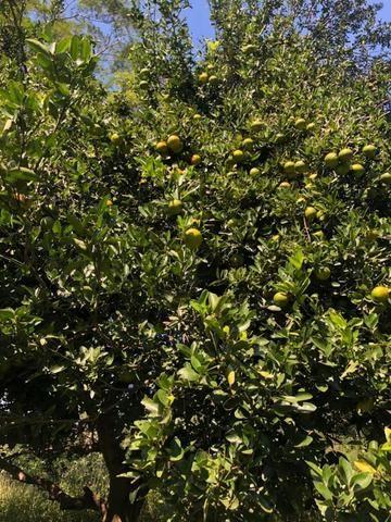 Chacara em Sto Antonio Leverger 110metros de Beira de Rio C/Tanque de Peixes Arvores Fruti - Foto 7