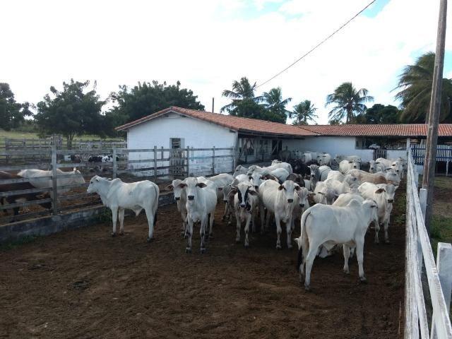 Fazenda em Monte Alegre - Com 80,52 Ha -Com Açude - Foto 12
