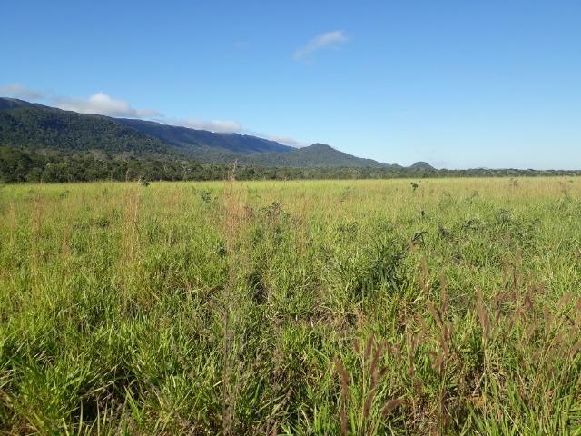 Fazenda 785 hectares ha 65 km de Jangada