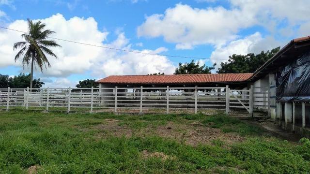 Fazenda em Monte Alegre - Com 80,52 Ha -Com Açude - Foto 11