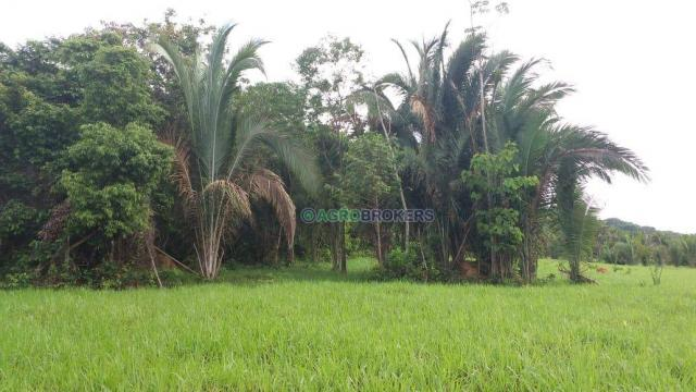 Sítio 19,5 ha em serra de são vicente - Foto 5