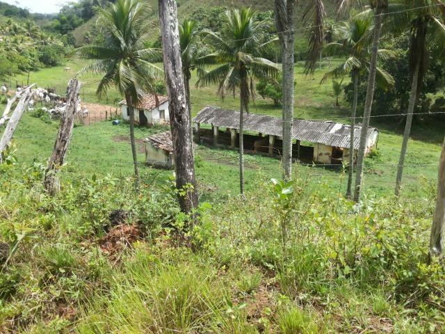 Propriedade rural com 140 HEC - Foto 10