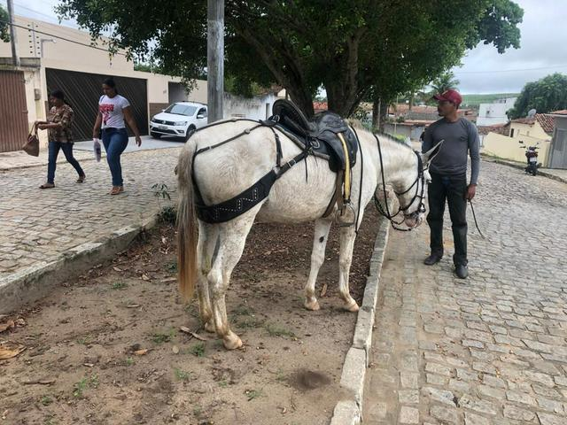 Burra chique - Foto 2