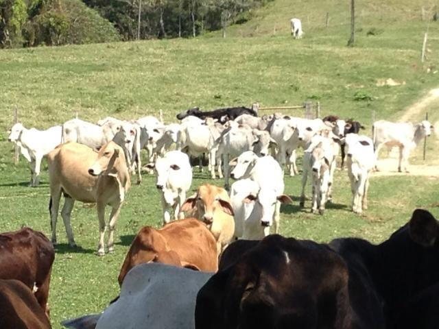 Arrendamento Fazenda Pecuária- Gado - Foto 2