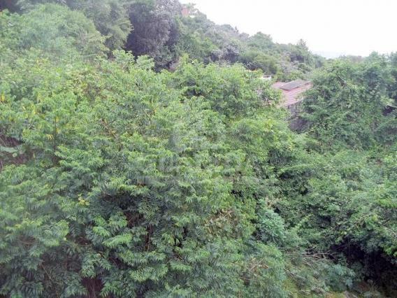 Casa de condomínio à venda com 2 dormitórios em Nonoai, Porto alegre cod:151060 - Foto 9