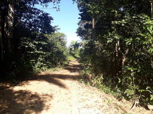 Fazenda 785 hectares ha 65 km de Jangada - Foto 14