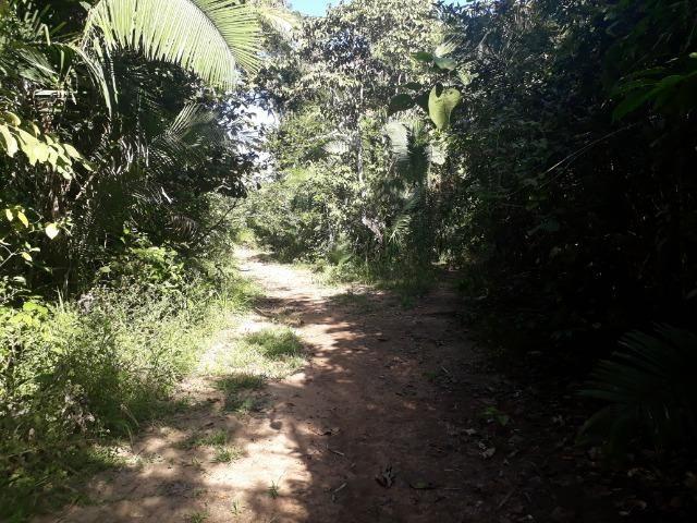 Fazenda 785 hectares ha 65 km de Jangada - Foto 16