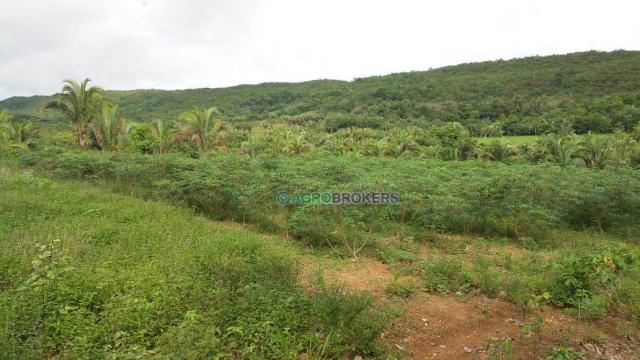Sítio 19,5 ha em serra de são vicente - Foto 6