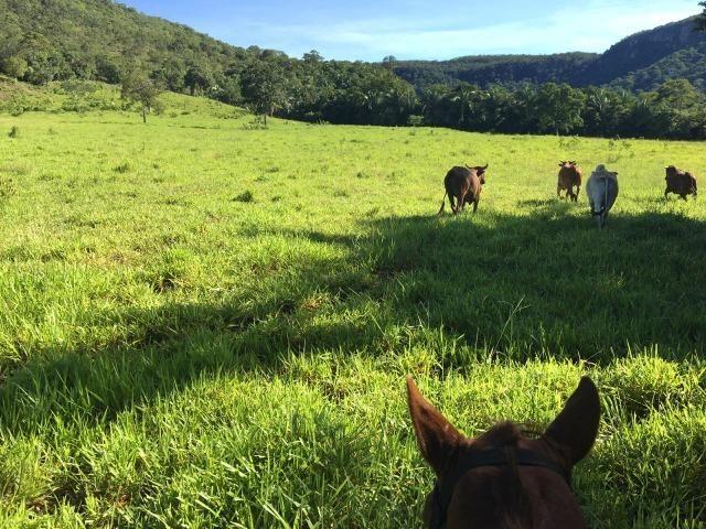 Fazenda a 4 km da BR 364 antes da Serra de São Vicente Prox do posto chapadão - Foto 5