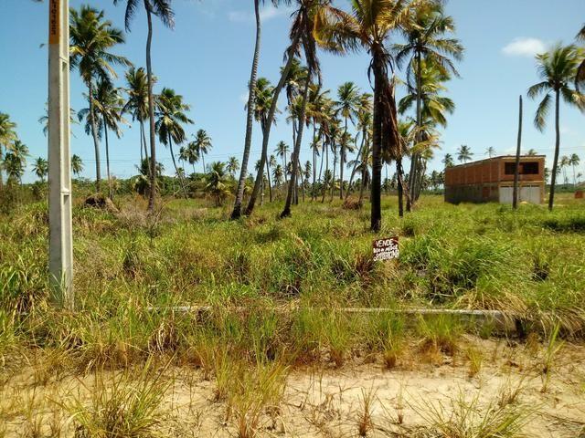 Terreno em São José da Coroa grande - Foto 4