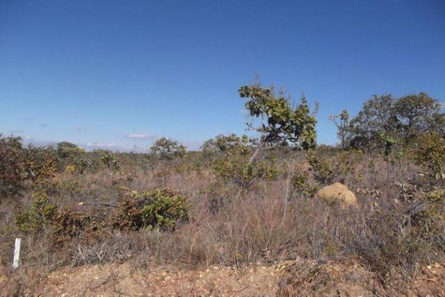 Lotes de 1.000 metros a 68 KM de BH (Financiamento Proprio) entra.7Mil * WhtsAPP - Foto 6