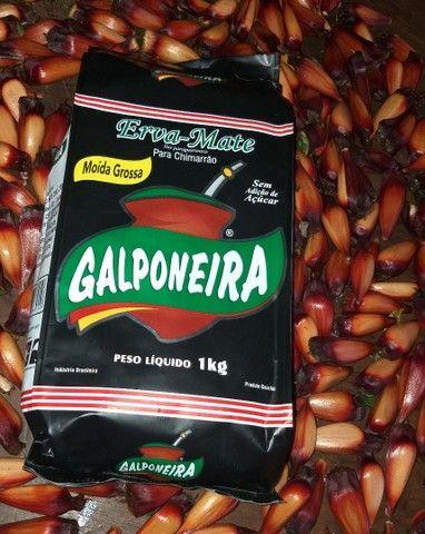 Erva mate Galponeira  - Foto 2