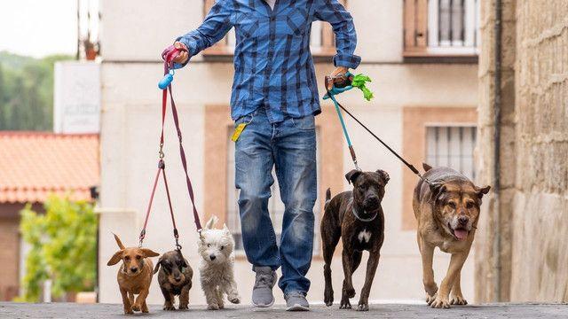 Passeadora de cães em Copacabana
