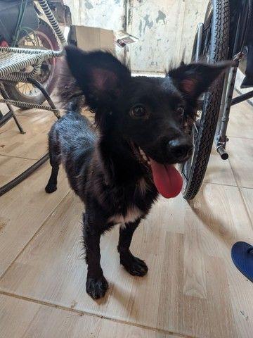 Doação de cachorrinha em fortaleza-ce - Foto 5