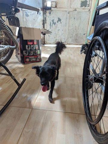 Doação de cachorrinha em fortaleza-ce - Foto 3
